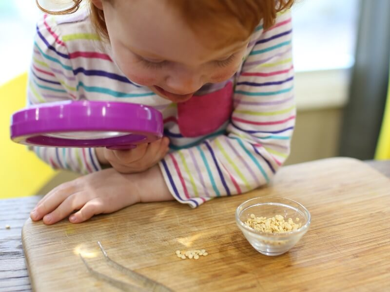 Exploring Vegetable Seeds | Simple Science for Toddlers
