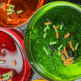 Fun and Creepy Petri Dish Jell-o!